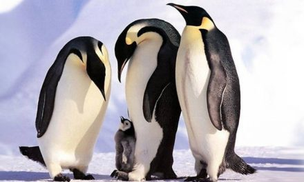 17 Animal Family Photos That Are Way Cuter Than Your Family Photos.