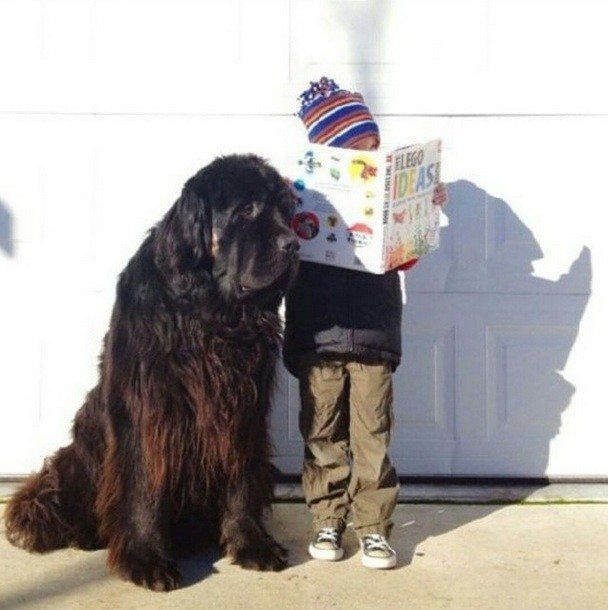 These 16 Adorably Ginormous Dog Breeds Are Bigger Than You Ever Imagined