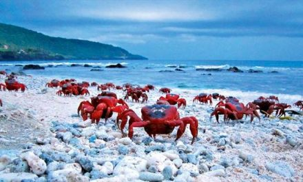 Unless You Love Crabs, You Don't Want To Be On This Island During December