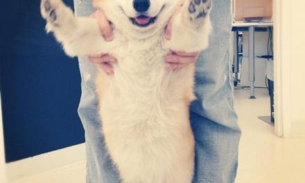 You Won't Stop Smiling After Seeing These 15 Ridiculously Happy Corgis