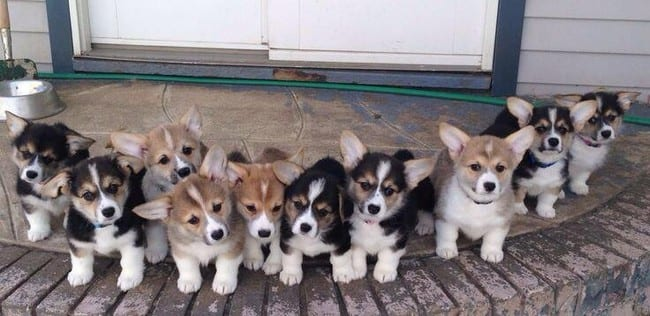 Too many cuties in one photo.