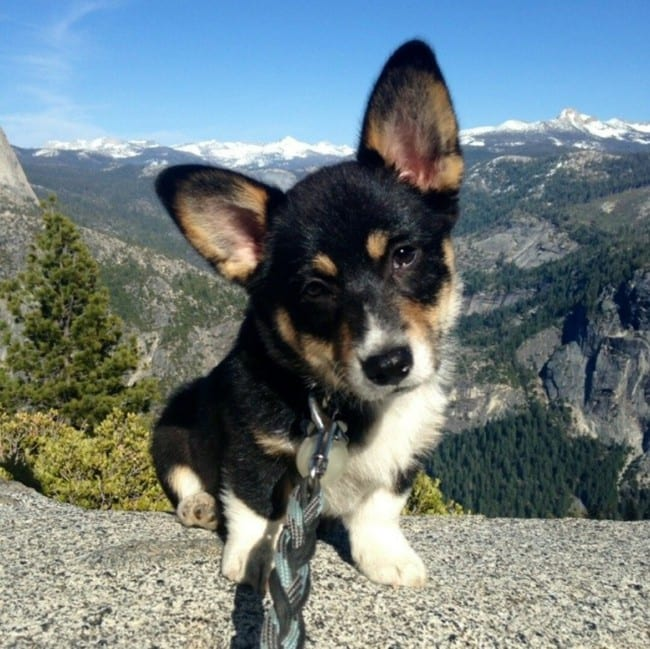 Even with their tiny, little legs, they can climb mountains with the best of 'em.