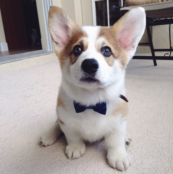 You're all ears and bow tie!