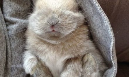 When It Comes To Easter, These 26 Tiny Bunnies Know How To Celebrate The Holiday