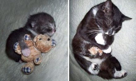 20 Adorable Photos Of Pets Who Still Love Their Old Toys