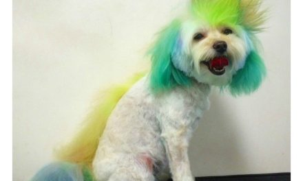20 Fabulous And Hilarious Doggy Hairstyles