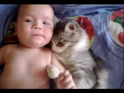 Cute cat loves baby – from funny and cute cats and babies collection