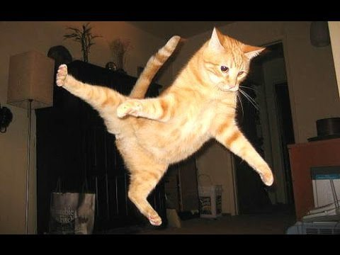 Funny Cats – A Funny Cat Videos Compilation 2015