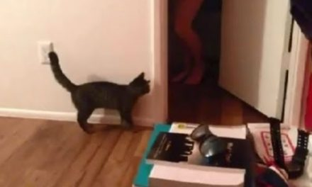 Scared Cat ! FUNNY