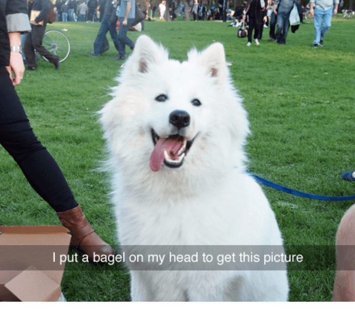 10 Hilarious Tumblr Posts About Animals That Will Give You A Good Chuckle