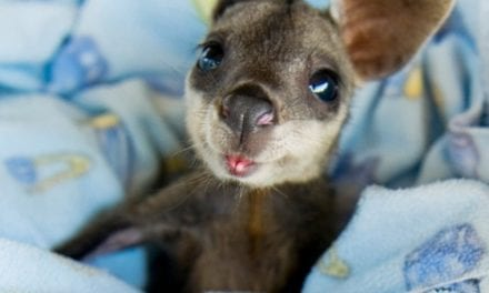 "13 Baby Animals So Cute, They'll Make You Go ""Aww"" Everytime"