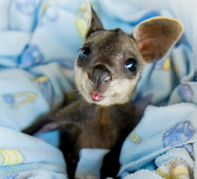 """13 Baby Animals So Cute, They'll Make You Go """"Aww"""" Everytime"""