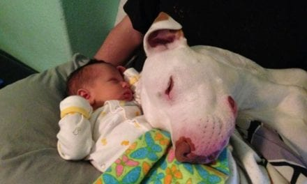 10 Photos That Prove That Babies And Dogs Are A Match Made In Heaven
