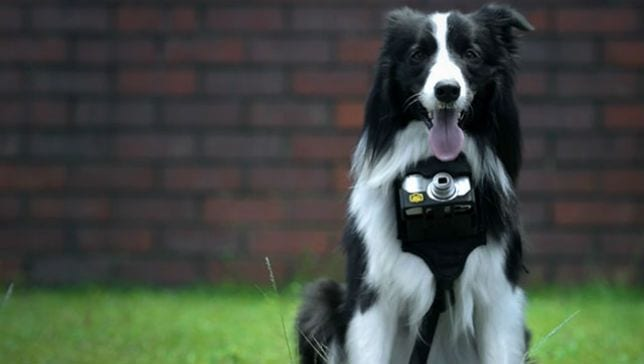 Nikon's Smart Camera Clicks Photos Whenever A Dog Gets Excited