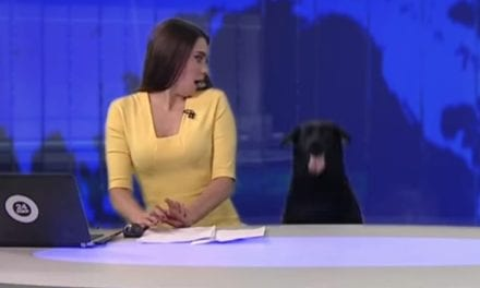 Dog's Surprising Appearance On Live News Startles News Anchor And It's Hilarious