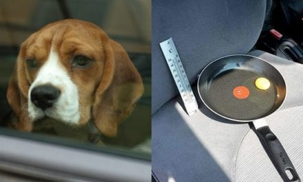 Man Performs Egg Experiment To Prove How Crazy It Is To Leave Dogs In Car On A Hot Day