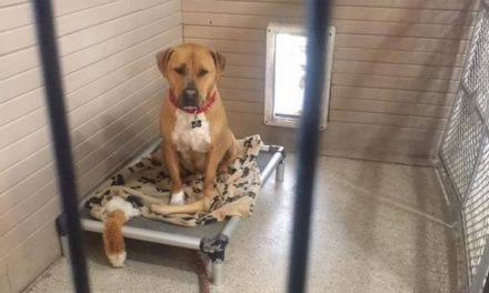 Sad Pup Has Been At The Shelter For 2.5 Years. No One Knows Why No One Wants To Adopt Him!
