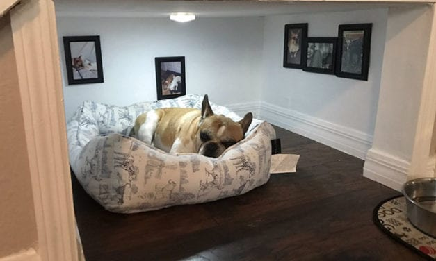 Man Builds Adorable Bedroom For His Dog Under The Stairs