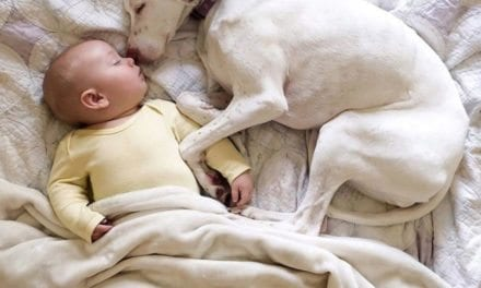 Abused Dog Was So Scared To Be Around Humans Except This Baby