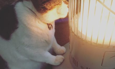 Sweet Photos Of Cat Getting Warm In Front Of The Heater Will Melt Your Heart