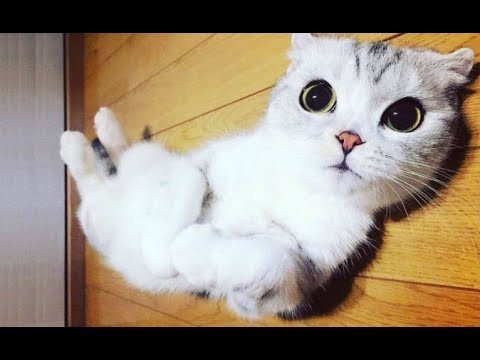 Top 10 FUNNIEST Cat Videos – Best Of FUNNY CATS 2017