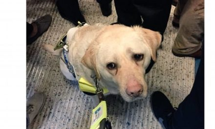 Blind Man Was Reduced To Tears After No One Gave Up A Seat For Him And His Guide Dog