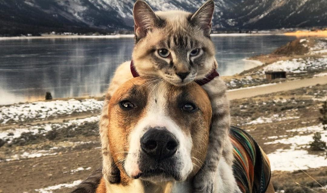 Photographs Depicts Animals Can Be Friends Too With Other Species which Is Unbelievable And Unique