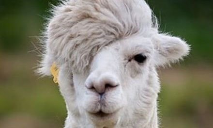 Cool Hairstyle Of Animals Which Will Make Every Human Being Envy