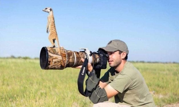 Photographs Proved That Animals Loves To Get Clicked And Even Helps Them To Take A Perfect Shot.