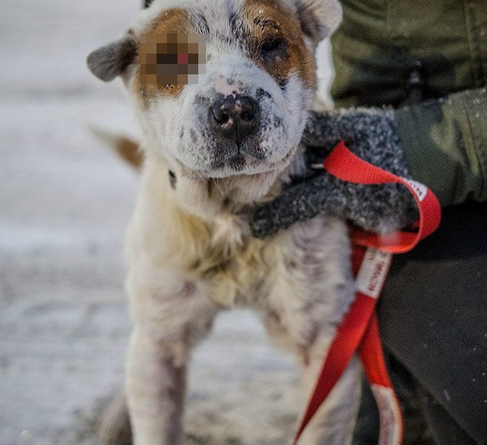 Animal Shelter Rescued One Chained Mistreated And Abandon Dog